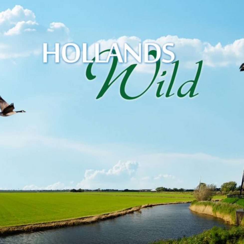 Hollandswild_Beeldmerk