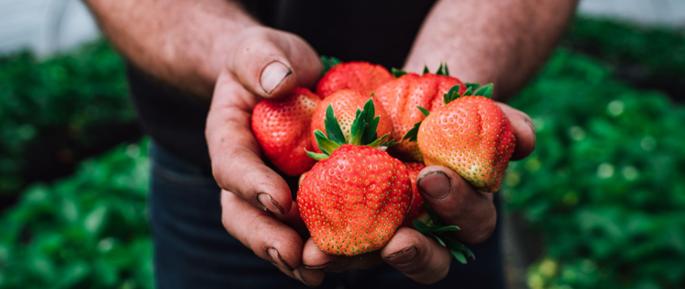 Seizoensproducten: zes heerlijke soorten groenten en fruit uit de zomer